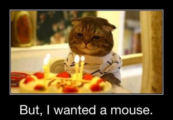 funny birthday celebration images photos free download funny