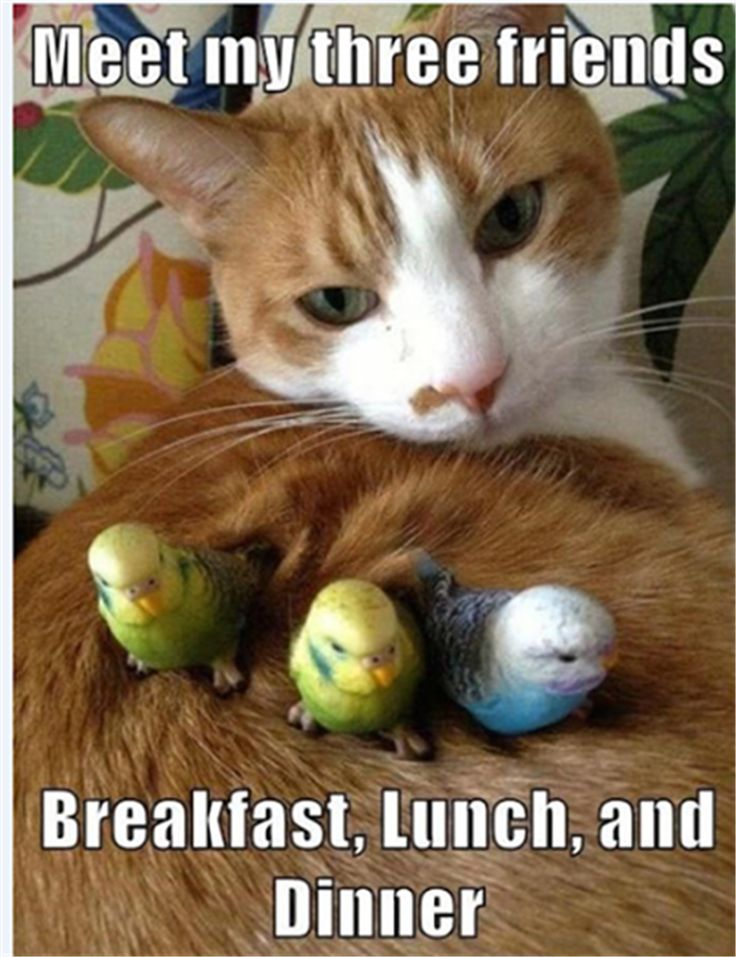 Image result for funny animals memes