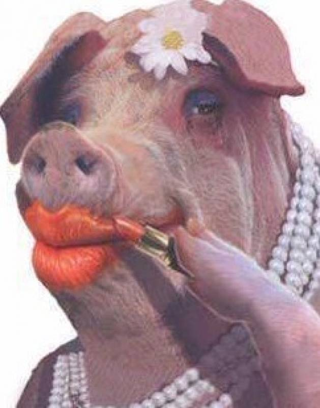 funny animals pig photos pictures lol Pig Doing Makeup Funny Picture 44 Pics of Funny Pigs Will Make Your Day