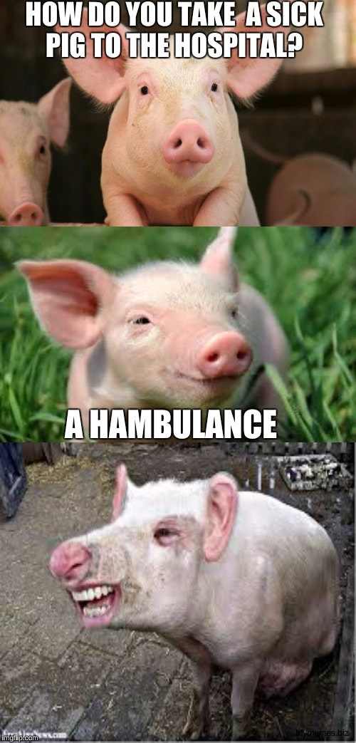 funny animals pig photos pictures lol funny pig memes 59dcdc7a46530 44 Pics of Funny Pigs Will Make Your Day