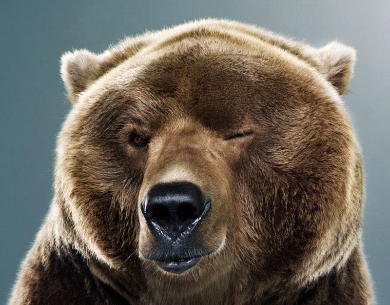 funny bear images lol animals photos mojly Bear With Funny Face Expression 54 Pics Of Funny Bear That Will Make Your Day