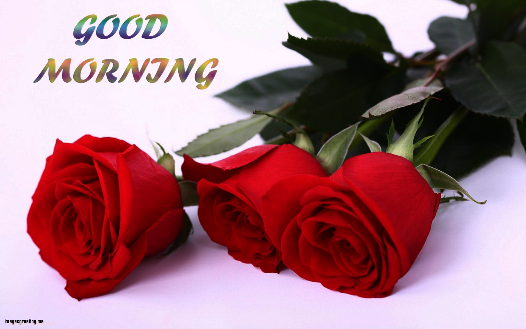 Lovely Good Morning Red Rose Hd Images Intended For Fresh Good Morning Rose Images Mojly