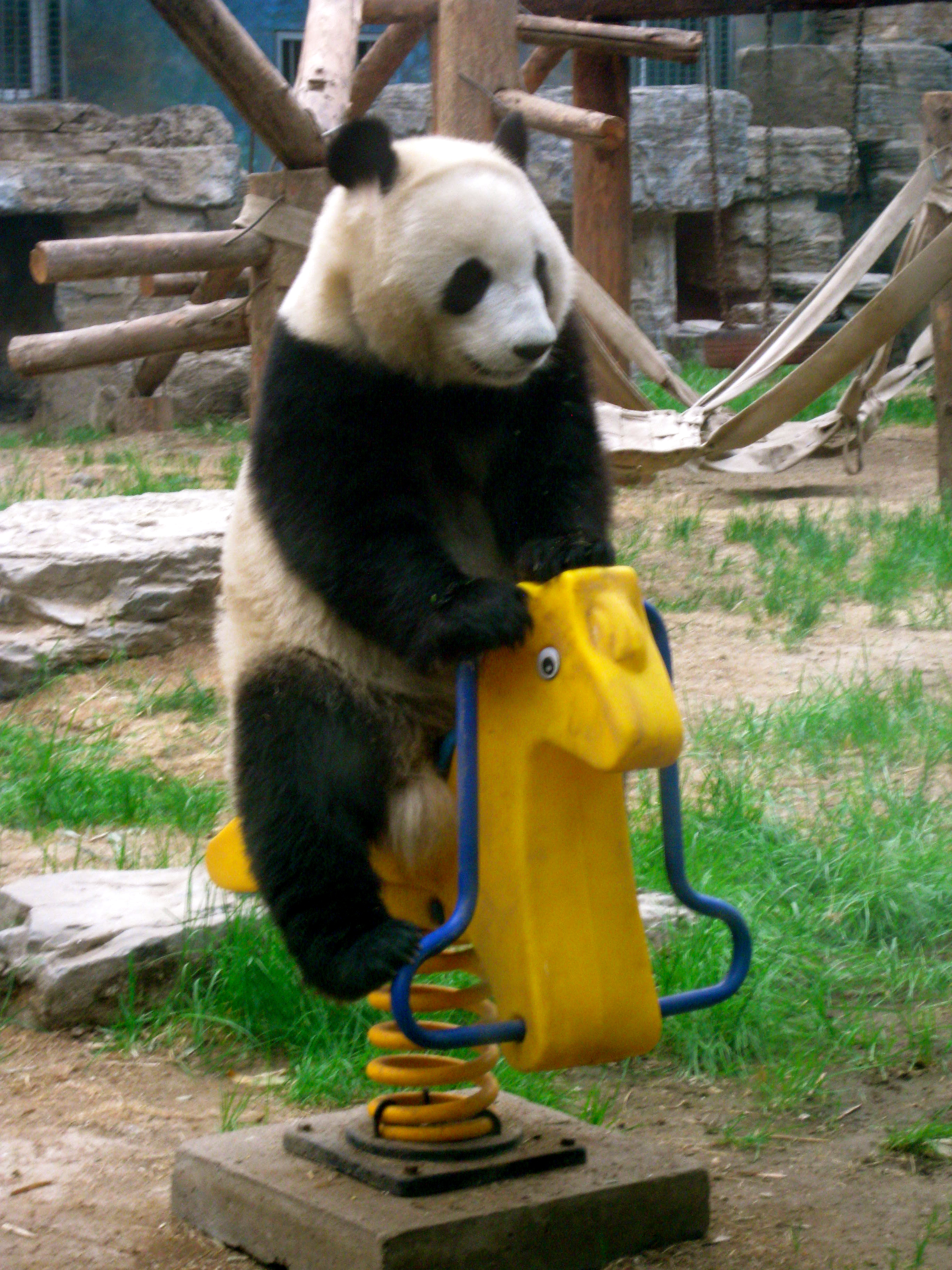animals panda doing human things funny images mojly 19 28 Animals Doing Human Things Will Make Your Day (28 Images)