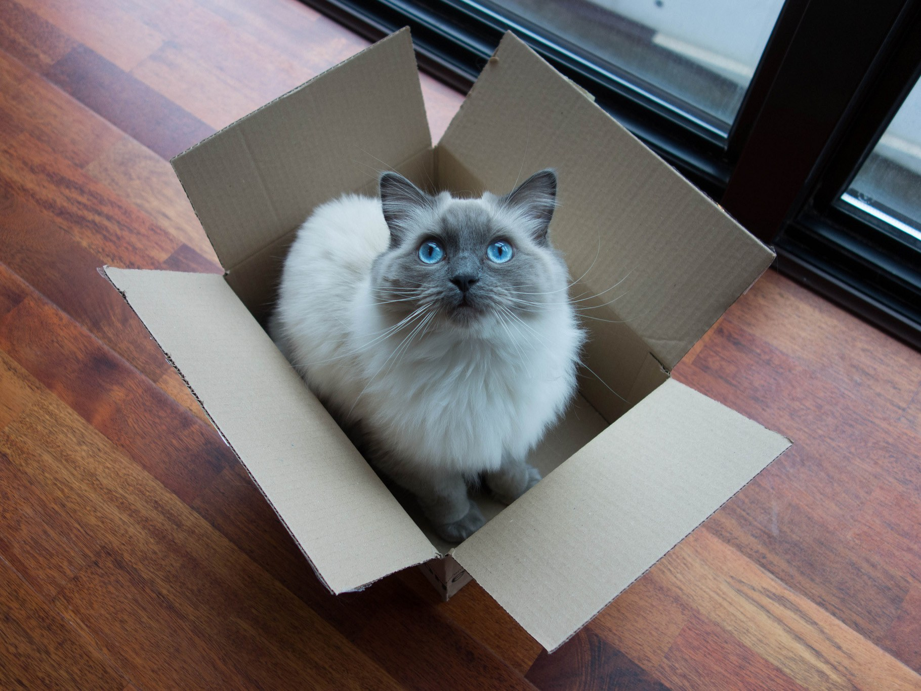 funny cat kitten in box animal pics cute images free catinbox paisley by kent wang 4x3 These Cats Will Teach You How To Sit In The Box..LOL (49 Photos)
